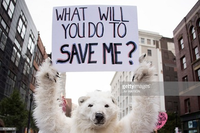 POLAR BEAR AND CLIMATE CHANGE